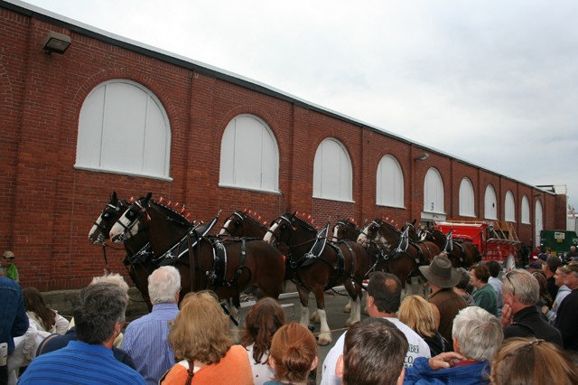 Hallamore Clydesdales, photo by Chris Brunson